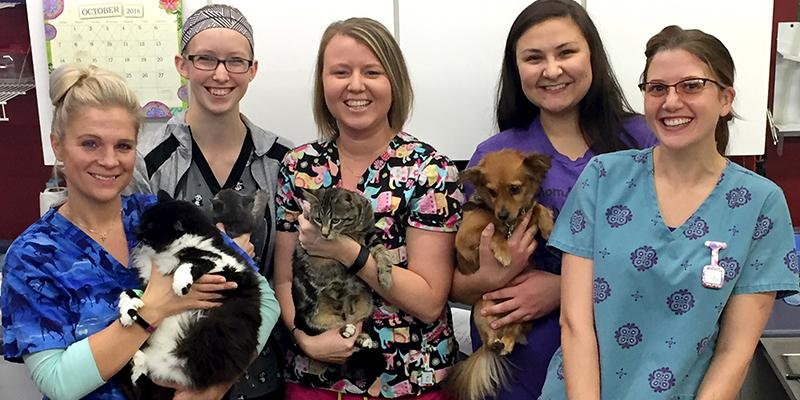 Animal Care Clinic Vet tech staff holding animals